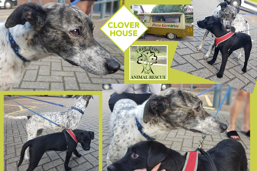Dog Rescue Centre Whitstable